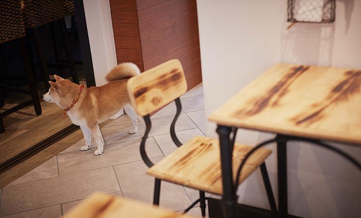 【ニューオープン】看板娘は柴の女の子! 今週のカフェ&スイーツ*43話『Dining cafeあん子の庭』