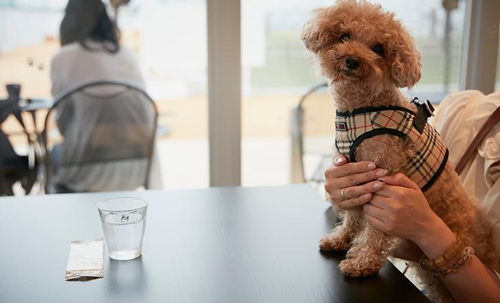 【ニューオープン】愛犬と一緒に行ける! わんダフルなドッグカフェ 今週のカフェ&スイーツ*63話『ガモウパーク』