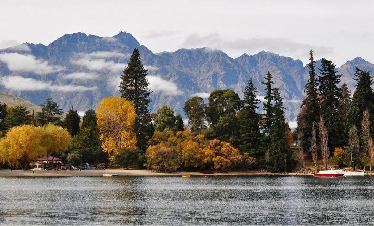 毎日の元気をサポート。ニュージーランドの大自然が育んだキウイ